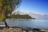 Lonley Tree - Queenstown - New Zealand
