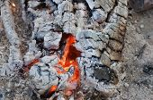 Texture Of Burnt Wood, Shallow Depth Of Field. Closeup Of Burning Firewood With Charcoal, Hot Ashes  poster