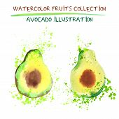 Set Of Watercolor Avocado Vector Illustration. Splashed Hand Draw Avocado Isolated On White Backgrou poster