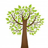 Baum mit grünen Leafage, isolated on white Background, Vector illustration