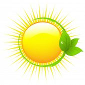 Sun With Leafs, Isolated On White Background, Vector Illustration