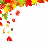 stock photo of fall leaves  - Falling Leaves - JPG