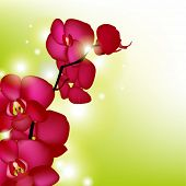 Pink Orchids With Blur, Vector Illustration