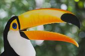 Colorful Toucan (Ramphastos Toco)
