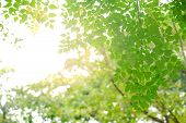 Green Leave In Garden With Sunny For Natural Spring Summer Background poster