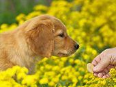 Pequeño cachorro en flor amarilla