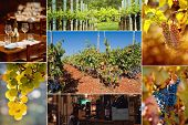 Collage of three photos - grapes, bottle and vineyard.