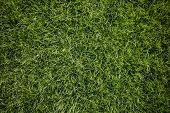 Bright Green Grass Background. Fresh Green Grass Field. Top View. Green Grass Texture For Print, Web poster