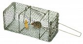 picture of mouse trap  - Mouse trap with a trapped mouse on it - JPG