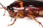 foto of creepy crawlies  - Close up of a cockroach on white background - JPG