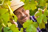 Happy Senior Vintner