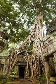 Ancient Ta Prohm or Rajavihara Temple at Angkor, Siem Reap, Cambodia.