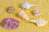 Summer shell