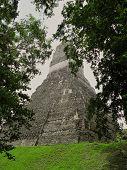 Mayan Temple  In Tikal