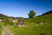 image of feedlot  - Summer agriculture Landscape with village and blue sky - JPG