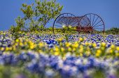 stock photo of bluebonnets  - Temporal contrast between an old piece of farm equipment sitting in a field of fleeting Texas bluebonnets - JPG