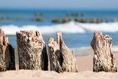 Baltic sea coast - wooden breakwaters closeup.