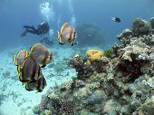 Cairnsouterreef