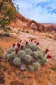 Cacti under Corona Arch