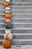 Pumpkins On The Concrete Stairs