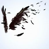 image of hawk  - Abstract image of black wings against light background - JPG