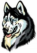 picture of husky sled dog breeds  - dog head - JPG