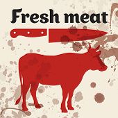 image of calf cow  - Fresh meat - JPG