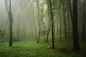 stock photo of tropical rainforest  - Green tropical rainforest with fog after rain - JPG