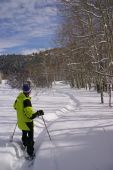 Yellow Parka Snow Shoe Hiker, On Winter Trail With Bare Aspens,
