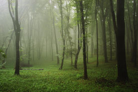 picture of rainforest  - Green tropical rainforest with fog after rain - JPG