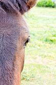 Spanish Donkey Half Portrait