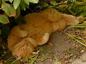 red tabby cat resting in tree shadow