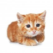 Cute red baby kitten isolated on white background