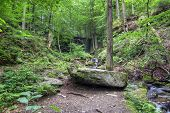 image of ravines  - Forest  - JPG
