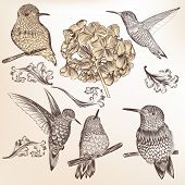 Collection Of Vector Hand Drawn Humming Birds For Design