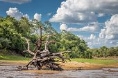 pic of wetland  - Landscape of Pantanal wetland - JPG
