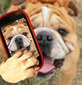 picture of animal teeth  - a bulldog close up of his face taking a selfie with a camera cell phone - JPG