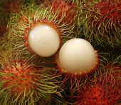 Asian Fruit Rambutan From Thailand