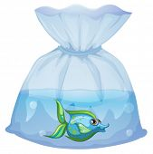 Illustration of a blue fish inside the plastic pouch on a white background