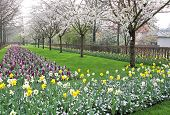 Keukenhof - Garden Of Europe, Netherlands