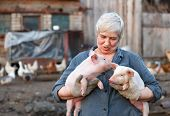 picture of animal husbandry  - Adult woman keep in the hands of two little pigs - JPG
