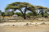 pic of mud-hut  - African house made of mud and straw in Kenya - JPG