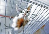A Cat In A Cage At An Interational Cat Exibition