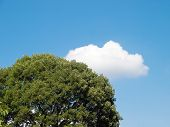 Cloud And Tree