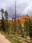 Trail At Bryce Canyon