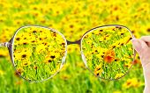Vision concept. Glasses in hand on wild flowers background