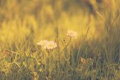 green grass and daisies, summer bokeh background, retro filtered, instagram style