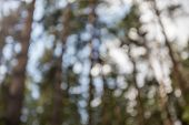 forest bokeh, green blurred background