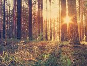 sunset in the woods, retro filtered, instagram style