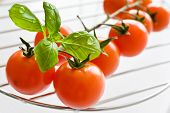 Fresh Red Tomatoes With Basil Leaf